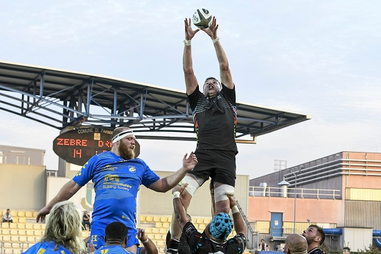 Biagi Zebre Dragons